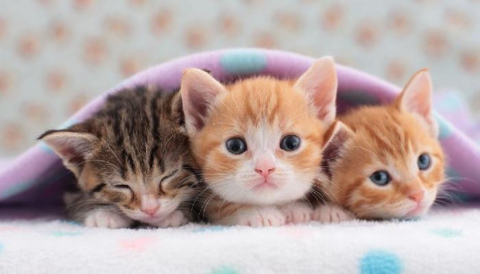 hukum menyakiti binatang,anak kucing manfaat memelihara kucing dalam islam