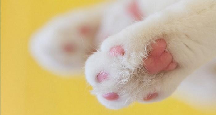 kuku kaki tangan kucing hukum mensterilkan hewan