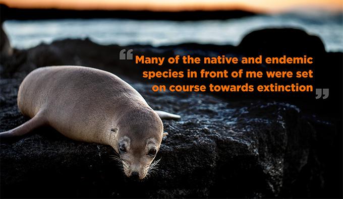 Galápagos Sea Lion. Photo by Bill Weir.