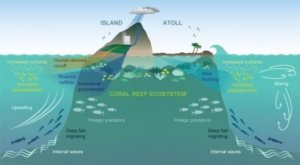 Island Conservation Ocean Oases: How Islands Support More