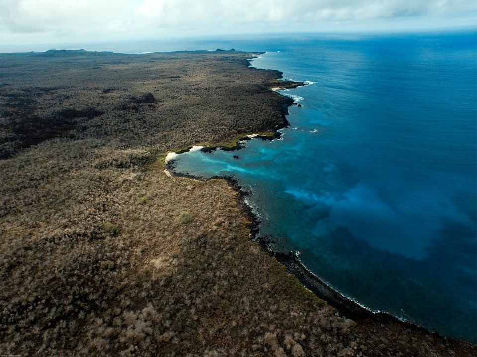 Islands watch conservation science
