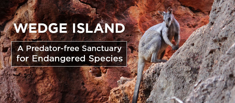 Island Conservation Science Wedge Island