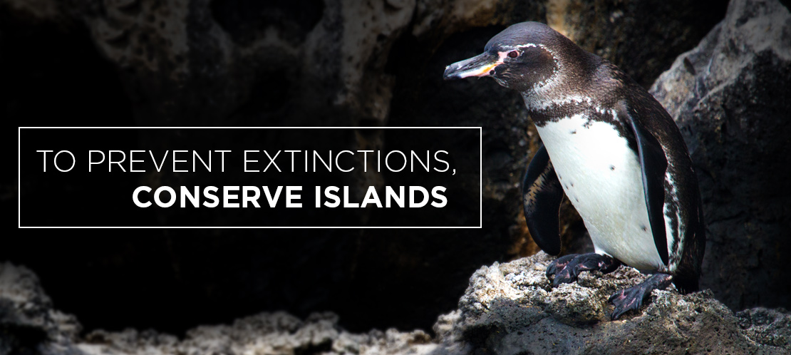Island Conservation Science galapagos penguin