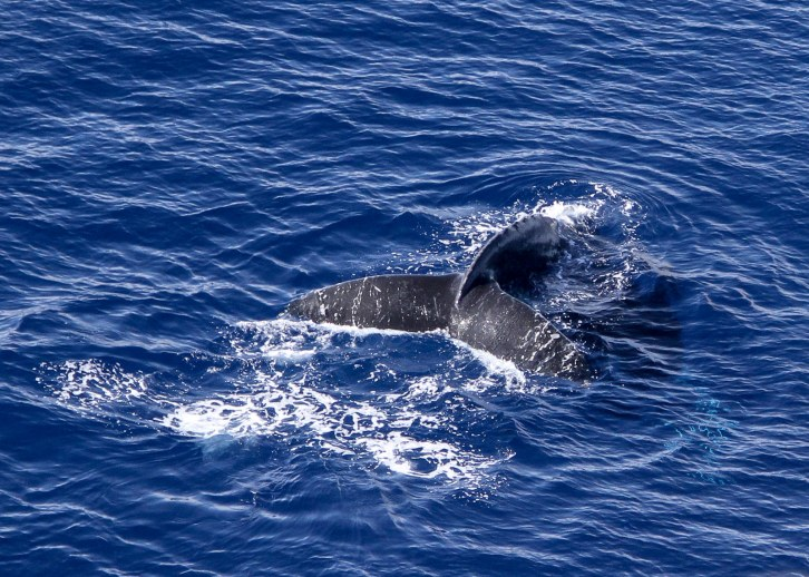 island conservation science whale kahoolawe