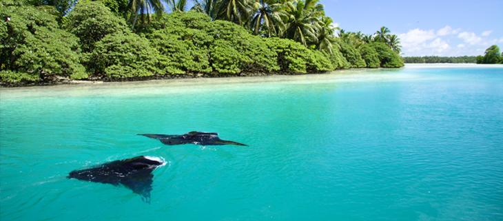 island conservation palmyra atoll line islands rays