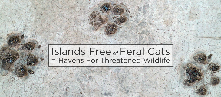 island conservation feral cat free