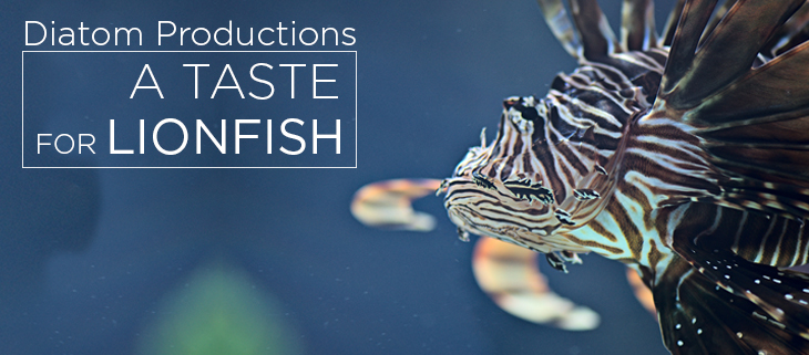 island conservation a taste for lionfish