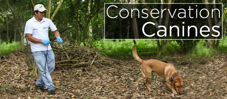 island conservation canines dogs