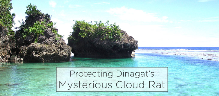 island conservation preventing extinctions philippines dinagat cloud rat