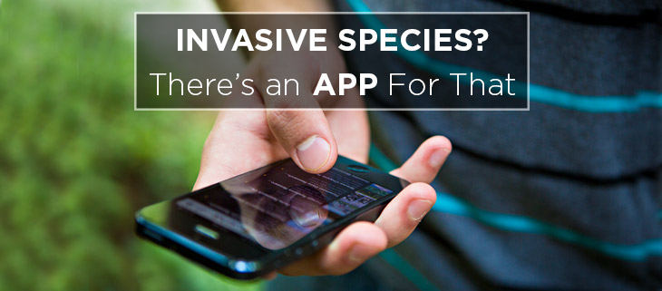 island conservation preventing extinctions phone app smooth green snake