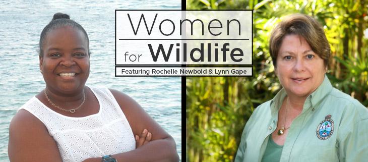 island conservation rochelle newbold lynn gape