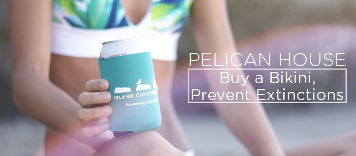 island conservation preventing extinctions pelican house
