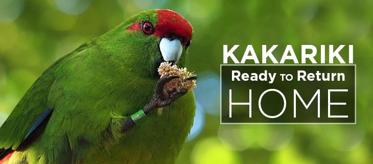 island-conservation-preventing-extinctions-kakariki-translocation-feat