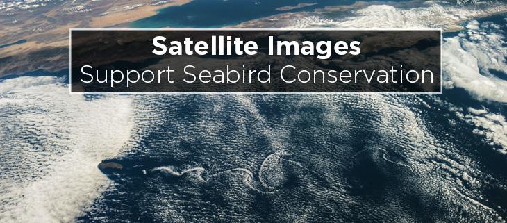 island-conservation-preventing-extinctions-satellite-albatross-feat