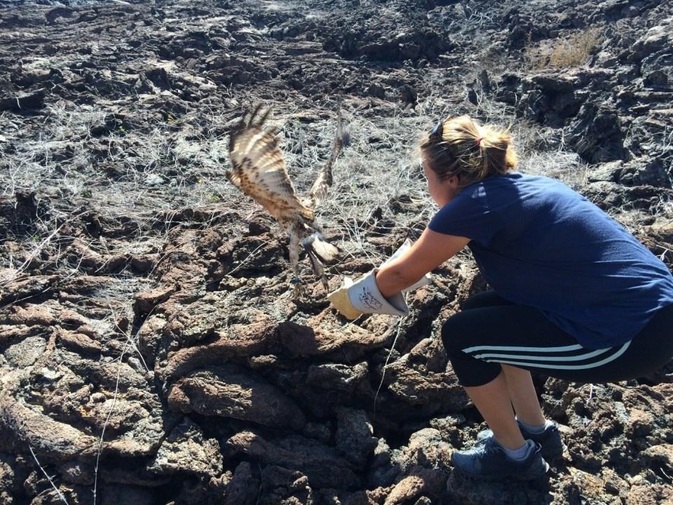 island conservation paula wildlife veterinarian