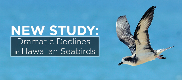 island-conservation-preventing-extinctions-seabirds-hawaii-feat