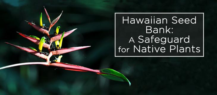 island-conservation-hawaii-seedbank-feat