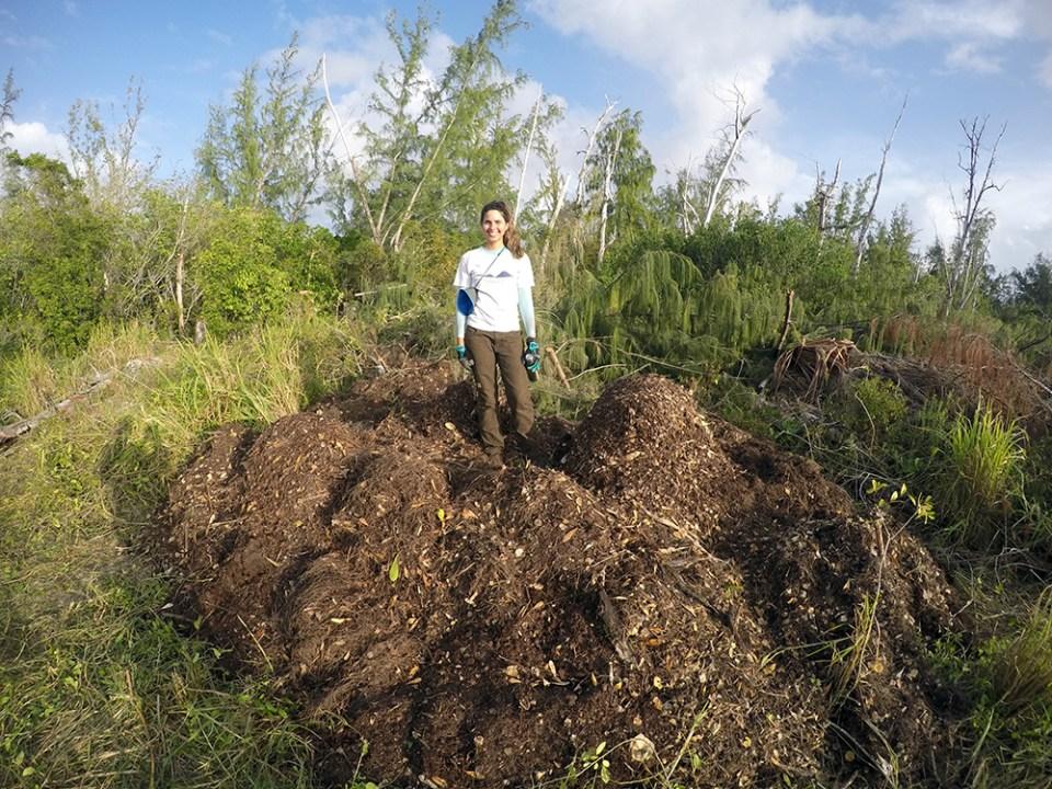 island-conservation-preventing-extinctions-mona-island-iguanas-restoration-debris