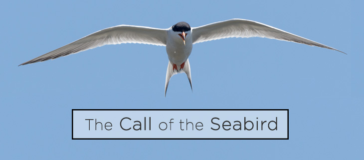 island-conservation-seabird-call-acoustic-monitoring-feat