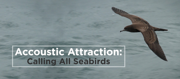 island-conservation-accoustic-attraction-seabirds-feat