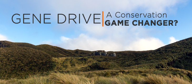 island-conservation-preventing-extinctions-gene-drive-environment-feat