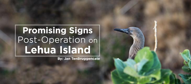 island-conservation-lehua-rat-poison-drop-pilot-whales