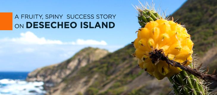 harrisia-island-conservation-puerto-rico-desecheo-cielo-figuerola-feat