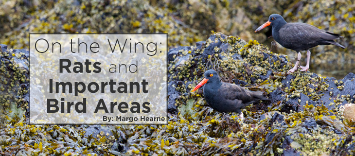 island-conservation-haida-gwaii-important-bird-area-feat