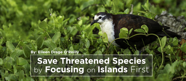 island-conservation-islands-species-feat