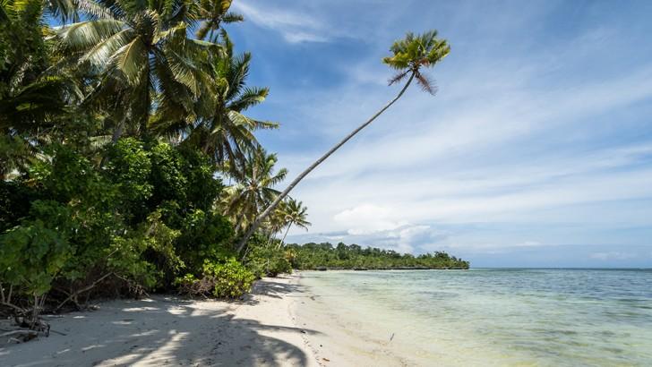 island-conservation-island-view