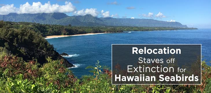 island-conservation-hawaii-seabird-relocation-feat