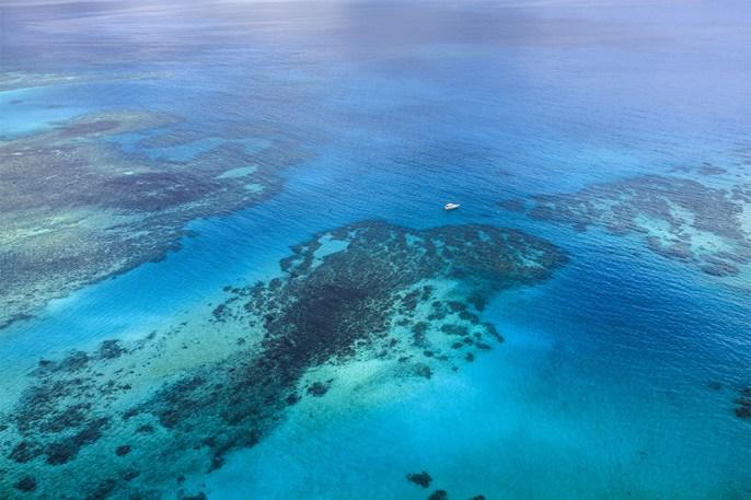 island-conservation-invasive-species-preventing-extinctions-Great-Barrier-Reef
