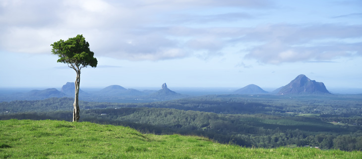 island-conservation-invasive-species-preventing-extinctions-australia-tree-feat
