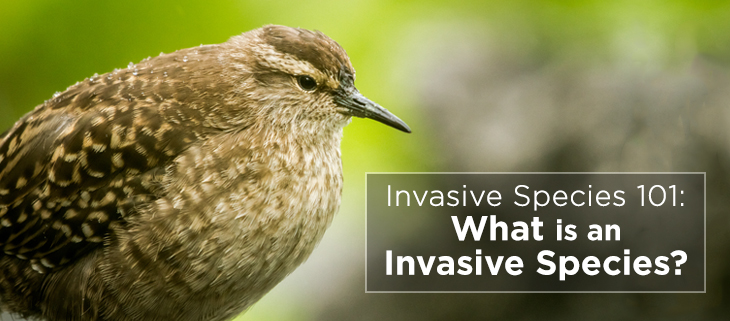 island-conservation-invasive-species-preventing-extinctions-invasive-species-awareness-feat
