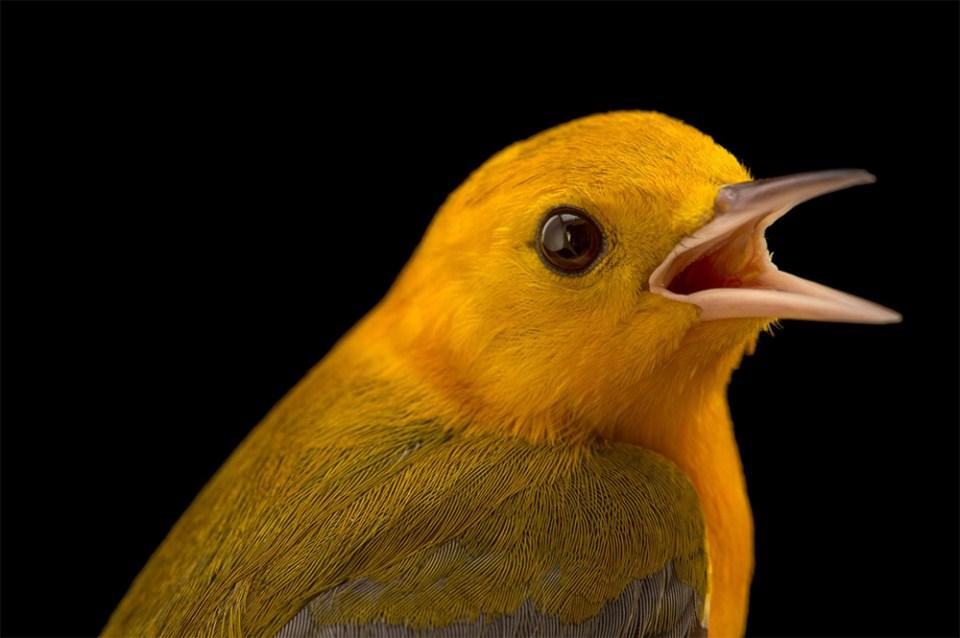 island-conservation-preventing-extinctions-invasive-species-birds-animals-species-photo-ark