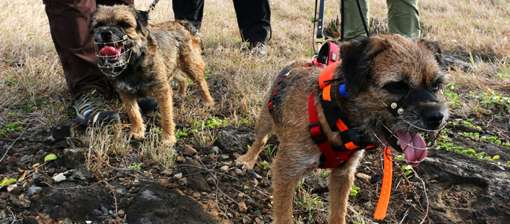 island-conservation-invasive-species-preventing-extinctions-lehua-detection-dogs-feat