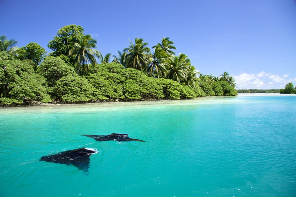island-conservation-invasive-species-preventing-extinction-coral-reefs-palmyra-atoll-manta-ray