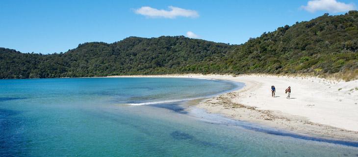island-conservation-invasive-species-preventing-extinctions-New-Zealand-new-species-Stewart-Island-feat
