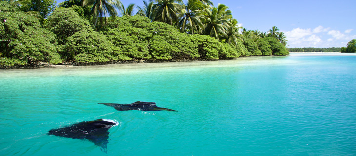 island-conservation-invasive-species-preventing-extinctions-coral-reef-WIRED-palmyra-atoll-manta-ray-feat