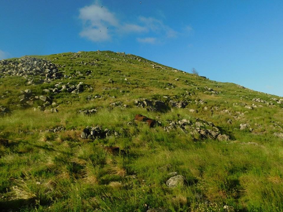 island-conservation-invasive-species-preventing-extinctions-redonda-island-after-conservation