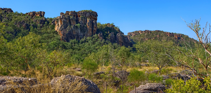 island-conservation-invasive-species-preventing-extinctions-feral-cats-Kakadu-National-Park-Australia-feat