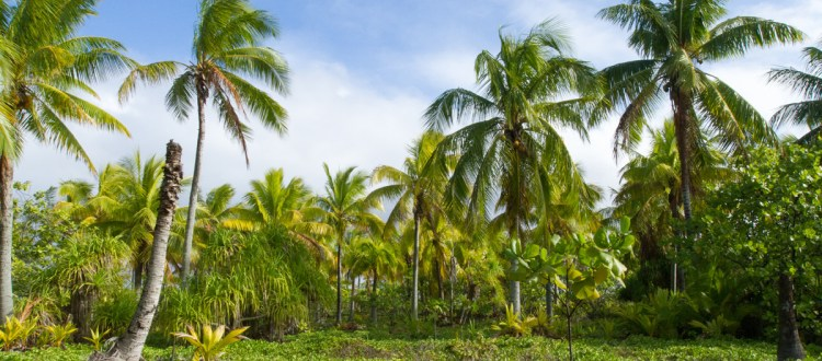 island-conservation-invasive-species-preventing-extinctions-simberloff-non-native-invasive-biodiversity