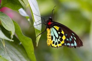 butterfly  029
