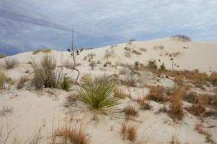white sands  039
