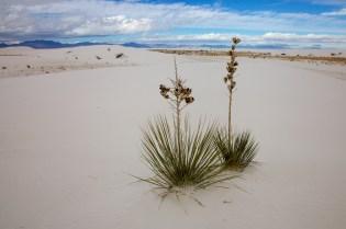 white sands  053