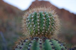 Tucson  049