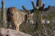 Tucson 057