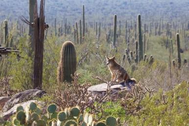 Tucson 058