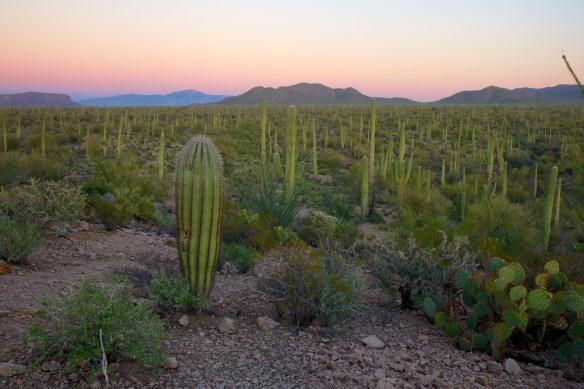 Tucson  113