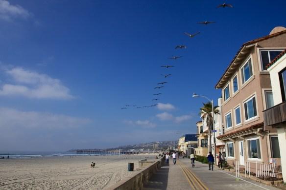 San Diego Beaches  006